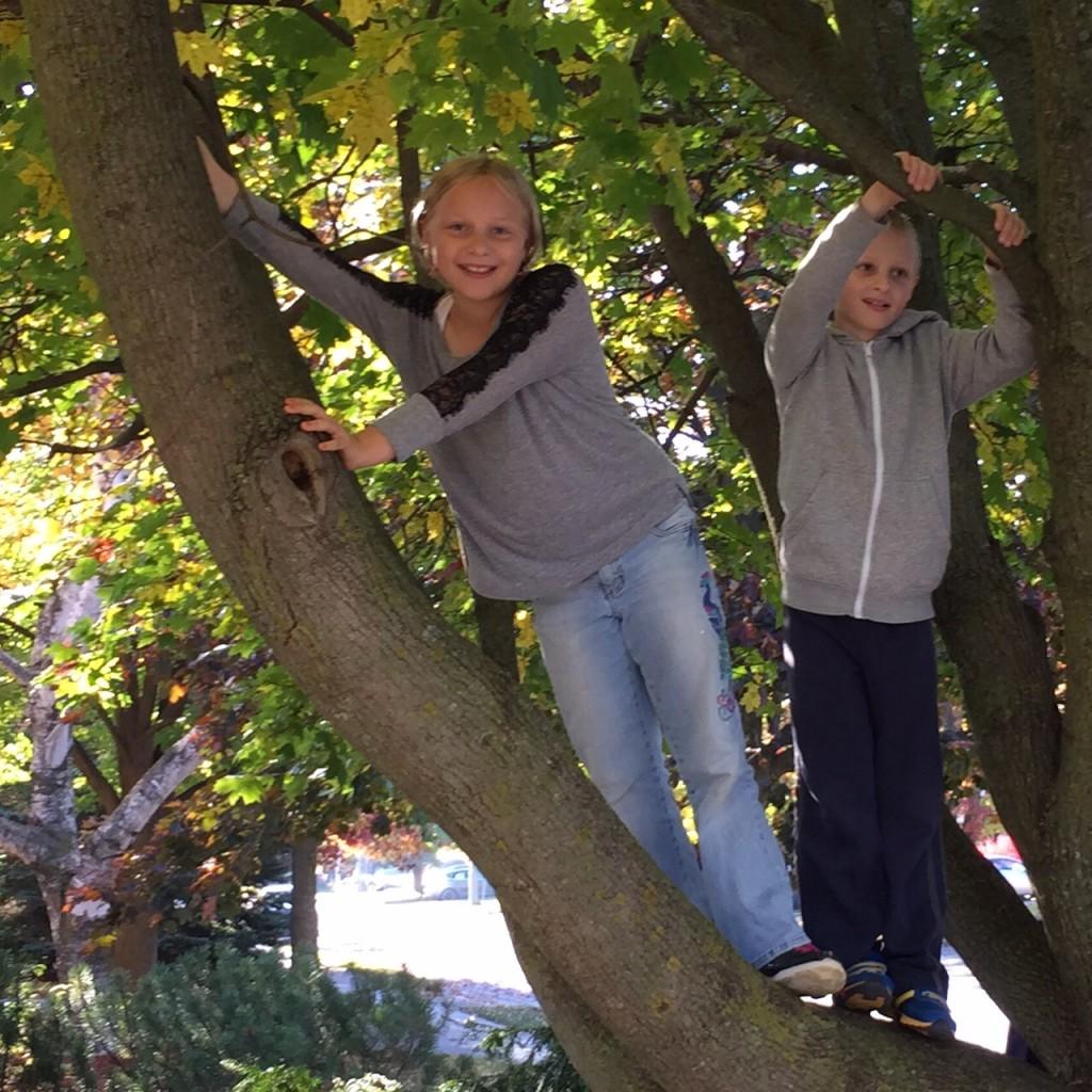 Guelph - kids in tree